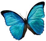 Leitlinie FEM - Schmetterling-Logo